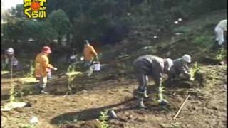 getlinkyoutube.com-孫の手ブルーベリー園 苗木の植え付け作業の様子