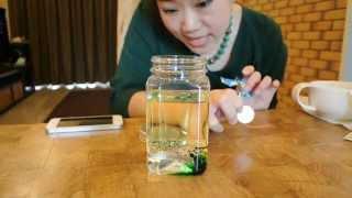 getlinkyoutube.com-วิธีทำระเบิดลาวา Lava Lamp โดยครูแม่ขวัญ - Science for Kids
