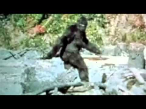 BIGFOOT SIGHTING REAL MUST SEE 2013!!!