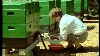 getlinkyoutube.com-работа с многокорпусен пчелен кошер Лангстрот-Рут