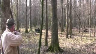 getlinkyoutube.com-Pissed Off Charging Boar!  Wild Hog Hunting  -  Boar Hunting