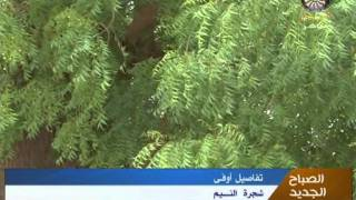getlinkyoutube.com-شجرة النـــيم ..... السودان