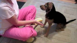 getlinkyoutube.com-Does Your Dog REALLY Want to be Petted?