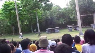 getlinkyoutube.com-Pertunjukan harimau putih taman safari indonesia II prigen Pasuruan
