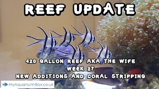 getlinkyoutube.com-420 Gallon Reef aka The Wife Week 27 New additions and Coral Stripping