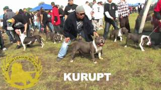 getlinkyoutube.com-ABKC American Bully Dog Show 3-14-09 Woodland, CA