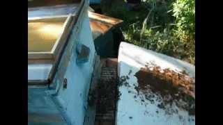 ПЧЕЛОВОДСТВО bee(ловушка сработала)