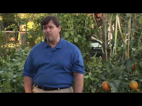 Fruit Tree Maintenance : How to Fertilize Fruit Trees
