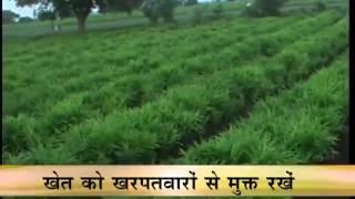 getlinkyoutube.com-Tips about cultivation of ginger