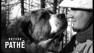getlinkyoutube.com-French Alpine Troops - The St Bernard Dogs (1939)