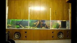 getlinkyoutube.com-Aquarium Bau