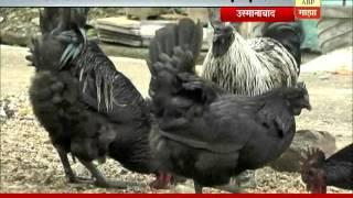 getlinkyoutube.com-Osmanabad: kadaknath chicken & eggs sold on OLX APP