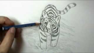 getlinkyoutube.com-How to draw a tiger