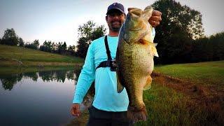 getlinkyoutube.com-Pond Fishing Buzzbaits and Rats - MONSTER!