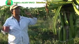 getlinkyoutube.com-DOST-PCARRD: Dragon Fruit Production
