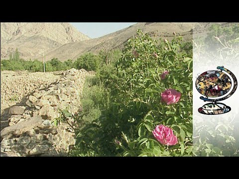 Iranian Innovation in the Fight Against Desertification