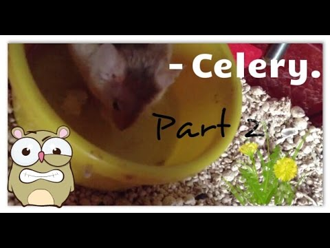 Mouse Eating Celery