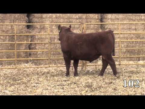 Beckton Red Angus 2014 Sale Lot 102