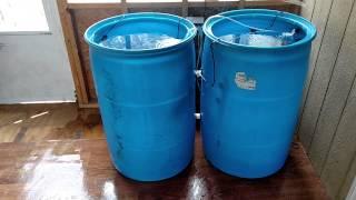 getlinkyoutube.com-Barrel blue tilapia