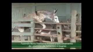 getlinkyoutube.com-Acre Rural: Criatório de Jumentos e Muares Nova Fronteira