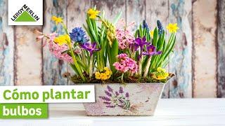 getlinkyoutube.com-Aprende a plantar bulbos (Leroy Merlin)