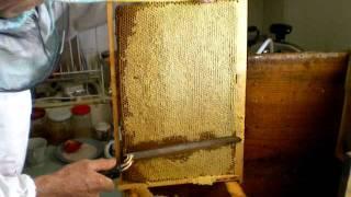 getlinkyoutube.com-Я обрезаю рамку с медом...
