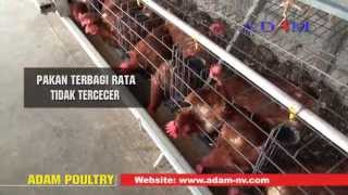 Kandang Ayam Modern yg Efisien Pakan & Tenaga Kerja - Petelur - ADAM Malang