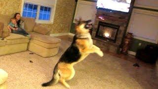 getlinkyoutube.com-Dog Attacks Quadcopter!