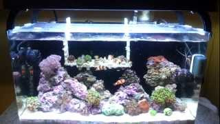 getlinkyoutube.com-Innovative Marine NUVO 16 reef saltwater nano tank