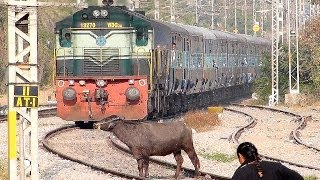 getlinkyoutube.com-Crazy Buffalo STOPS the Train and escapes : Indian Railways