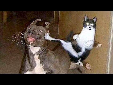 طوشة شرسة بين كلب وقطة متوحشة