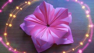 getlinkyoutube.com-Оригами Цветы Из Бумаги Для Открыток, Кусудам. Как Сделать Поделки Своими Руками