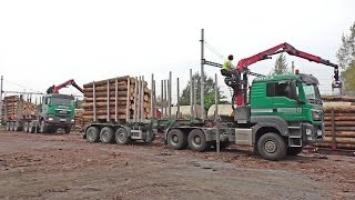 Man timbertrucks load rail wagons