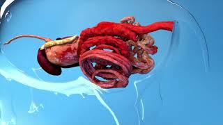 PATENTE HERBA PLUS - zaštita zdravlja digestivnog trakta svinja