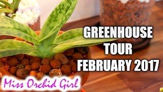 getlinkyoutube.com-Orchid Greenhouse tour - February 2017