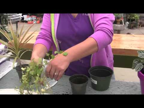 The 2 Minute Container Gardening Lesson