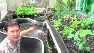 getlinkyoutube.com-What is Aquaponics? How it Works & Why an Aquaponic Setup Can Fail