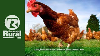 getlinkyoutube.com-PARACATU RURAL 28 02 16 (programa completo)