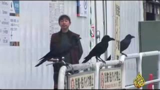 getlinkyoutube.com-الفيلمـ الوثائقى غربان طوكيو1/6