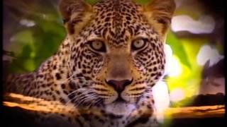 getlinkyoutube.com-Really Wild Animals: Swinging Safari: Songs (With New Sound Effects) (READ DESCRIPTION BELOW)