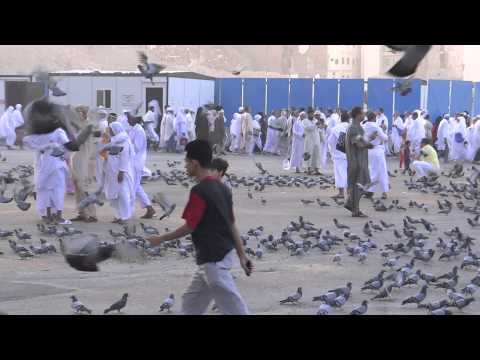 Pigeons of Mekkha near Khana Kaba 24 March 2013 Saudi Arabia