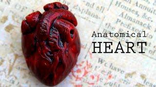 getlinkyoutube.com-DIY Anatomical Human Heart Polymer Clay Magnet Tutorial