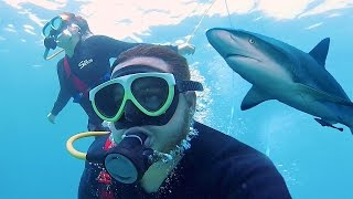 getlinkyoutube.com-SWIMMING WITH SHARKS IN HAWAII!