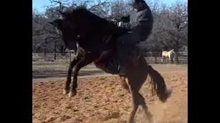 Wrong Way First Horse Ride -  Bucks Off Rider - Dangerous Horse Steals Calf