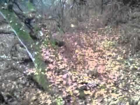κυνηγι μπεκάτσας στην καβαλα [3}.MP4