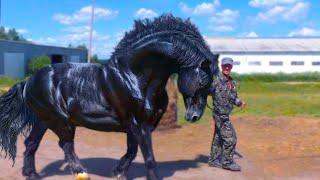 getlinkyoutube.com-أغلى 10 حيوانات فى العالم