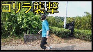 getlinkyoutube.com-【恐怖】ゴリラ襲撃ドッキリ Gorilla Prank