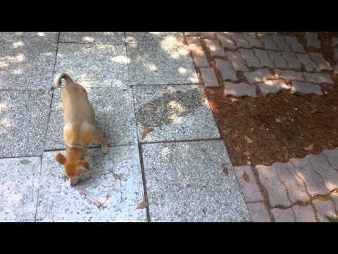 Come pulire dove il cane fa pip tutto per casa - Pulizia tappeti ammoniaca ...