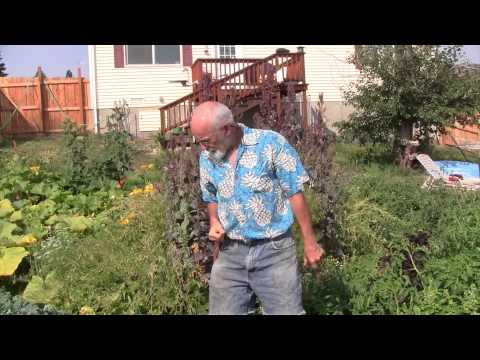 backyard garden tour