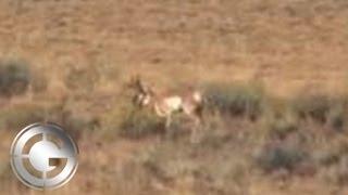 getlinkyoutube.com-715 Yard Muzzleloader Antelope Kill Shot - Long Range Hunting